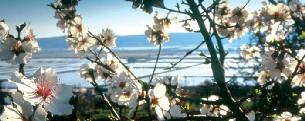 Blüten (c) Life Claas Hotel Portoroz